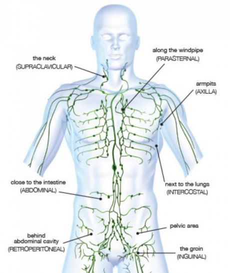 Rumbolds Clinic Mld And The Lymphatic System